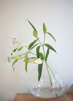 stargazer lily | via Neustadt Blog