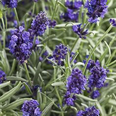 Top 10 Perennials for Easy Maintenance | Proven Winners