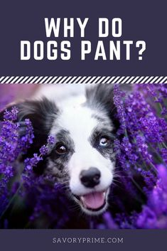 Why Do Dogs Pant? | Savory Prime Pet Treats
