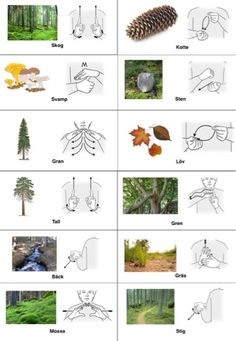 Swedish sign language: in the wood Tecken som stöd: Skog del 1 Tags : Sign Language Corner , Swedish Sign Language , Baby Sign language, learning signs Sign Language Phrases, Sign Language Interpreter, Baby Sign Language, Nature Activities, Learning Activities, Preschool Activities, Kids Barn, Learn Swedish, Swedish Language