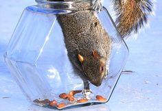 A hexagon fish bowl can become a squirrel food bowl! #DIY - PetDIYs.com
