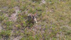 Bunny in the Bad Lands South Dakota