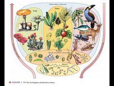 Five Kingdom Classification System EM Branches Of Biology, Ems