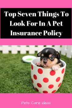 Understanding Pet Insurance for Cats – Animal Health Info Pet Health Insurance, Dog Insurance, Buy Pets, Healthy Pets, Dog Teeth, Teeth Cleaning, Dog Care, Dog Food Recipes, Cats