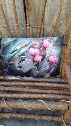 Desert cactus by DesertsandBeyond on Etsy