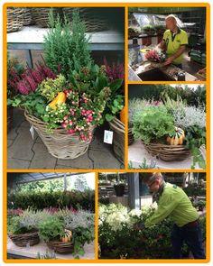 Prachtige herfstarrangementen. Kleur voor in uw tuin of op terras.