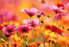 Growing Different Types of Flowers: Annuals, Perennials, #Flowers Growing from Bulbs