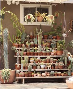 Tips for Care in Cactus Care Check out some tips for cacti . Tips for Care in Cactus Cactus House Plants, House Plants Decor, Plant Decor, Garden Plants, Indoor Plants, Indoor Cactus, Indoor Gardening, Balcony Garden, Cacti And Succulents