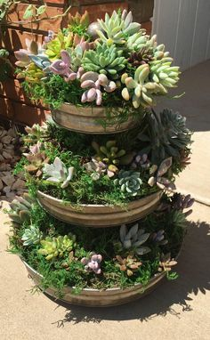 Container Gardening Ideas Made to order. Live soft succulents in tiered container. Beautiful display for wedding, spring, bridal shower. Live soft succulents in tiered container. Beautiful display for wedding, spring, bridal shower. Succulent Landscaping, Succulent Gardening, Container Gardening Vegetables, Cacti And Succulents, Planting Succulents, Organic Gardening, Gardening Tips, Succulent Garden Ideas, Kitchen Gardening