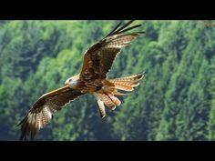 FLY LIKE AN EAGLE - Native American Song (Voar Como Águia - legenda PT) - YouTube///( SOMETHING POSITIVE !!! )///