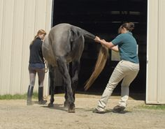 Recognizing the signs of equine neurological disorders and starting treatment early will give your horse his best chance of recovery from these diseases.