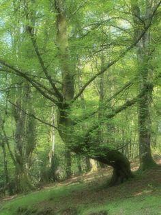 Primavera en la Reserva del #Saja. #Cantabria. #primaveraenCantabria