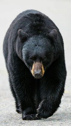 Do not shoot hibernating bears or any bears ! Cowards do this !
