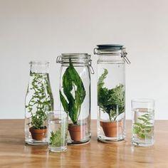 Matériel : une plante aquatique en pot, un bocal et de l'engrais pour plante aquatique. source source source