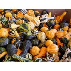 25 Gourd seeds Large Small Mix gourd seeds by nurseryseeds on Etsy Good Sources Of Protein, Seeds For Sale, Proper Nutrition, Garden Seeds, Food Preparation, Gourds, Stay Fit, Snack Recipes, Healthy Eating