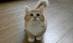 .gif cat - Google zoeken