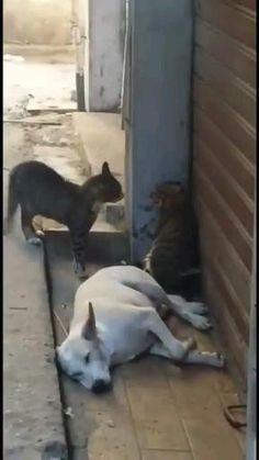 Animal Humour, Funny Animal Memes, Cute Funny Animals, Funny Animal Pictures, Cute Baby Animals, Funny Cute, Funny Dogs, Animals And Pets, Cute Cats