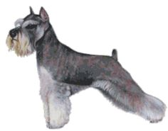 Miniature Schnauzer Dog Custom Designed Counted Cross Stitch Pattern