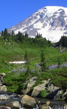 Mount Rainier National Park | Travel | Vacation Ideas | Road Trip | Places to Visit | Ashford | WA | Scenic Point | National Park | Nature Reserve | Natural Feature | Hiking Area | Historic Site