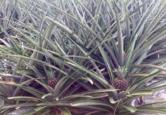 Costa Rica, Plants, Plant, Planets