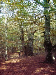 Paseo naturalístico por Robledal en Sakana, Navarra. Mirua Actividades de Naturaleza Plants, Trekking, Walks, Paths, Naturaleza, Activities, Plant, Planets