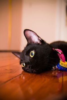 "<b>Today has been declared <a href=""https://www.facebook.com/pages/For-the-Love-of-Black-Cats-Black-Cat-Appreciation-Page/186841014709029"" target=""_blank"">Black Cat Appreciation Day</a>, so let's get to appreciatin'.</b> Black cats are demonized by urban legend, but in real life they're just super-pretty and extra-cute... I have proof!"
