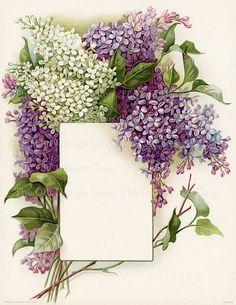 Vintage Lilac Bouquet Printable Art White Lilacs Purple Lilacs Frame a Blank Label Beautiful Floral