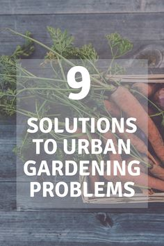 With a changing housing market, and the push for people to live in smaller spaces, or more condensed cities, the ability to grow for ourselves is also changing. This guide to urban gardening will walk you through some alternative gardening space options. Succulent Gardening, Urban Gardening, Container Gardening, Living Roofs, Garden Boxes, Grow Lights, Balcony Garden, Irrigation, Cities