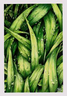 https://www.instagram.com/suescaur/ #aquarelle #watercolor #green #grass #dnesmalujem #painting  #greenleaves #leaves #dew