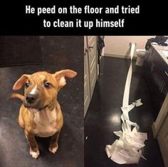 16 Funny Animal Pictures Of The Day #funny #picture