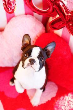 valentine-dog