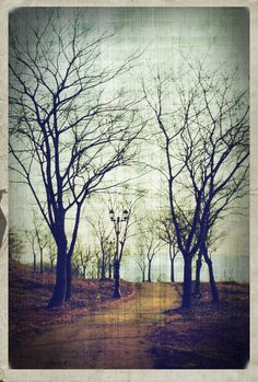 Vintage Tree by on deviantART Love Images, Great Pictures, Furniture Deals, Art Forms, Digital Art, Photoshop, Sky, Deviantart, Nature