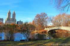 Preparar un viaje a Nueva York: la guía imprescindible Central Park, Nyc In December, New York 2017, New York City, Miami, Places To Visit, Mansions, House Styles, Life