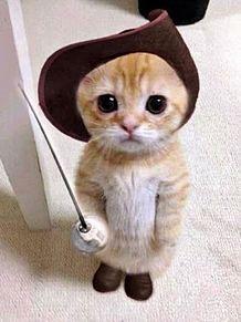 イモトの猫ちゃんの画像(プリ画像)
