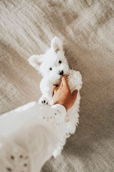 Dog Breeds Little .Dog Breeds Little Cute Little Puppies, Cute Little Animals, Cute Dogs And Puppies, Cute Funny Animals, Cute Baby Puppies, Yorkie Puppies, Samoyed Dogs, Cutest Dogs, Cute Fluffy Puppies
