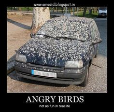 cool funny jokes: Angry birds joke