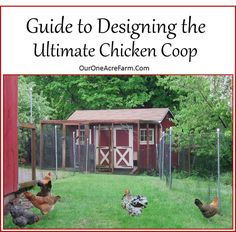 Designing the Perfect Chicken Coop: 15 Tips in Detail | Our One Acre Farm