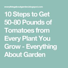 10 Steps to Get 50-80 Pounds of Tomatoes from Every Plant You Grow - Everything About Garden