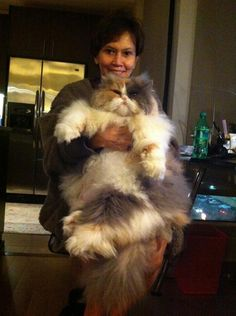 Holy hell that's a huge cat
