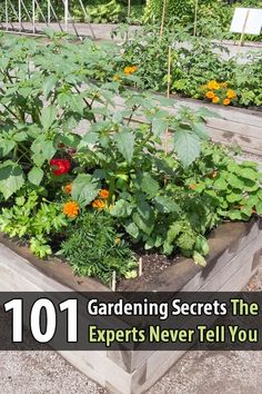 If you read just one article on gardening this year, read this one. It has 101 gardening tips that will give you a beautiful and productive garden.
