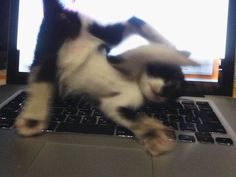 どっひゃー  ってなる ネコさん