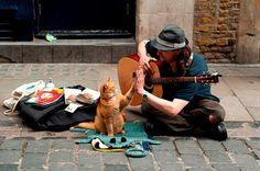 Бездомный музыкант и его кот по имени Боб - Гид Краснодар