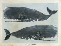 """Scott Kelley - """"The Sperm Whale, or Right and Left"""""""