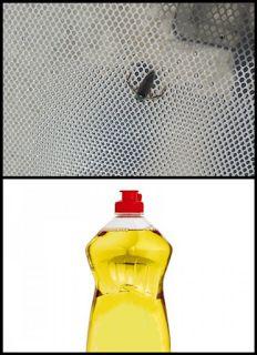 100% Natural: Elimina insectos nadadores de tu piscina