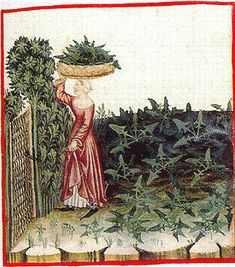 Spinach basket on head. The Theatrum of the Casanatense Library - late 14th century
