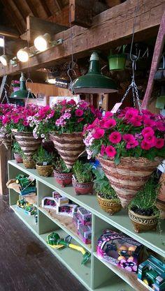 Petal Pushers, Flowers, Plants, Plant, Royal Icing Flowers, Flower, Florals, Floral, Planets
