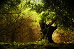 숲 속을 지키는 커다란 고목나무처럼!    Big Old Tree