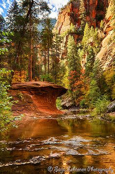 West Fork, Arizona; photo by Saija