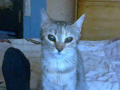 Name: Cili (blinde Katze)