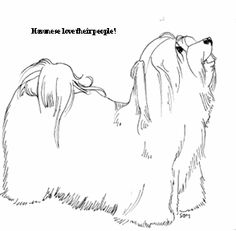 havanese coloring pages - Google Search